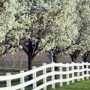 Photo of dogwood trees by a fence