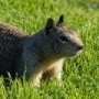 Photo of squirrel