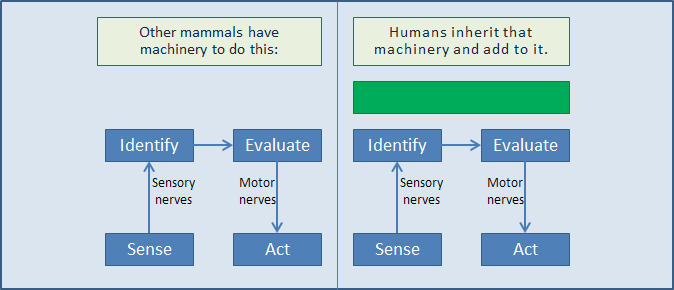 Diagram of mammal vs human consciousness