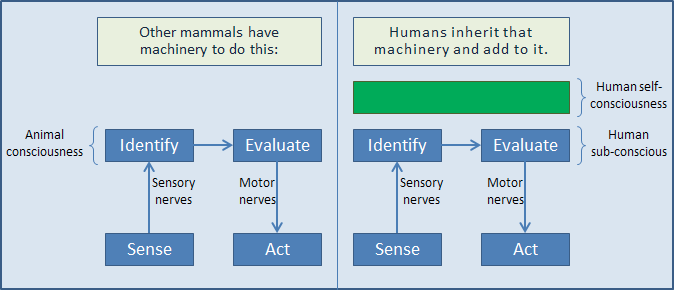 Diagram of mammal vs human consciousness, labeling human sub-consciousness and human self-consciousness.